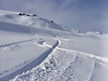 Experience (price per person): TONALE FREERIDE