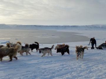 Adventure (price per person): Ski-Pulk Greenland expedition