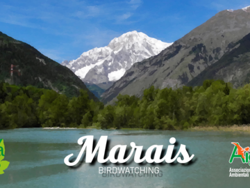 Experience (price per person): Marais Nature Reserve - Birdwatching