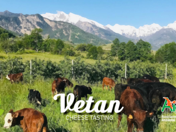 Experience (price per person): Alpeggio Vetan - Cheese Tasting