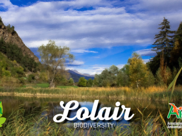 Experience (price per person): Lolair Nature Reserve - Biodiversity