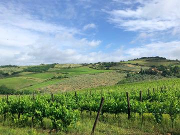 Experience (price per person): HIke and wine, The best of Chianti Classico