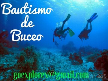 Experience (price per person): Bautismo de buceo