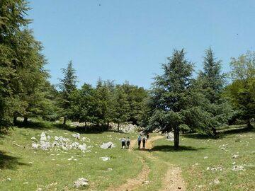 Experience (price per person): Gli appenini in Sicilia: Il Parco delle Madonie