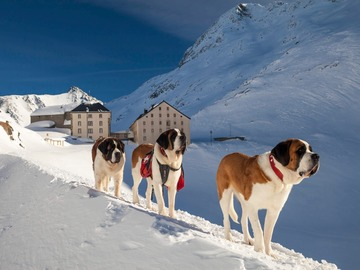 Reise (preis pro person): Snow-Shoe St Bernard 2 day 2 night experience