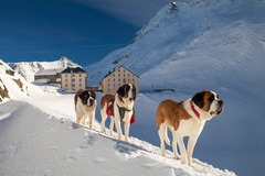 Voyage (price per person): Snow-Shoe St Bernard 2 day 2 night experience