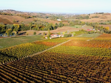 Experience (price per person): Le strade del Vino