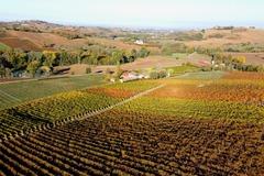 Experience (price per person): Le strade del Vino