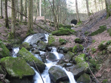 Experience (price per group): Le Foreste Sacre di Camaldoli