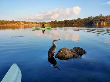 Entdeckung (preis pro person): Kayak a Biderosa - Orosei
